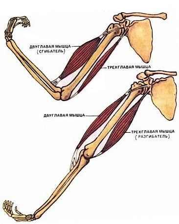 облегчить непростой непроизвольное сокращение мышц ног причины внешнему