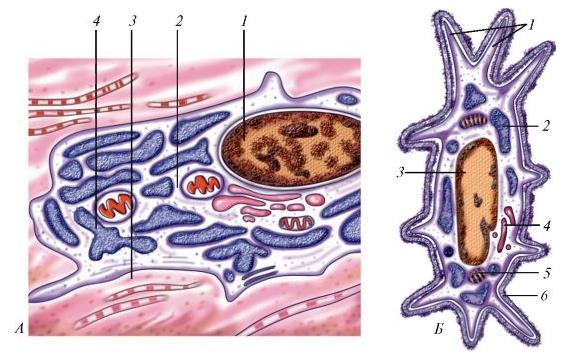 Схема строения костных клеток
